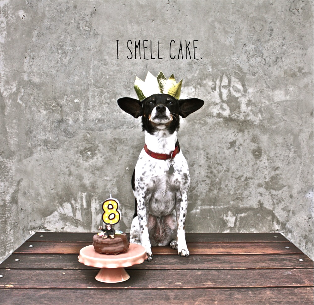 Happy Birthday Do I Smell Cake